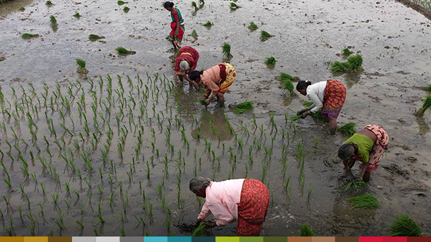 Paddy-Cultivation_slider