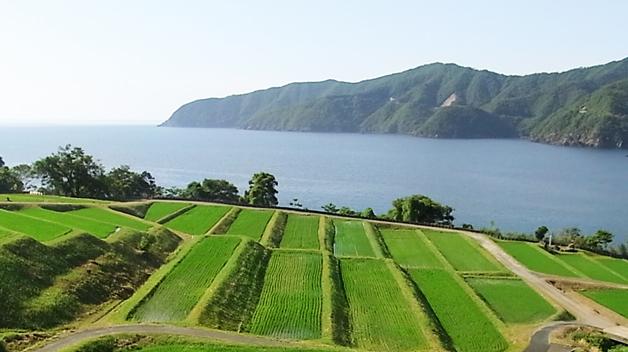 img-banner-satoyama