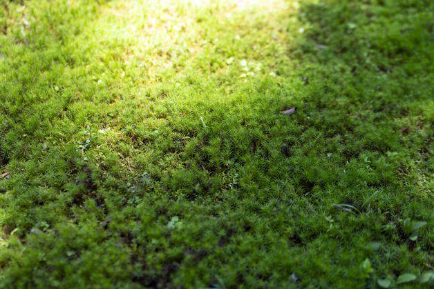 OUIK_garden