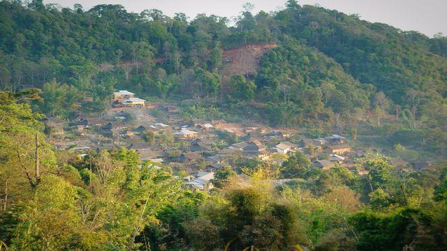 雲南のチャノキ林