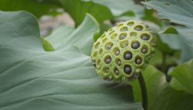 四季から学ぶ:金沢の生物多様性