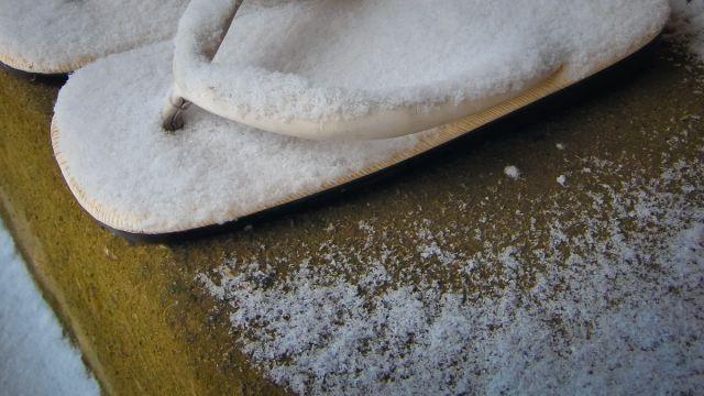 金沢の生物多様性:冬に学ぶ教訓