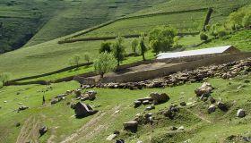 道路と家畜小屋で牧草地に緑を戻す