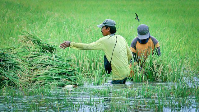 降雨の変化・食の安全・移住の相関性