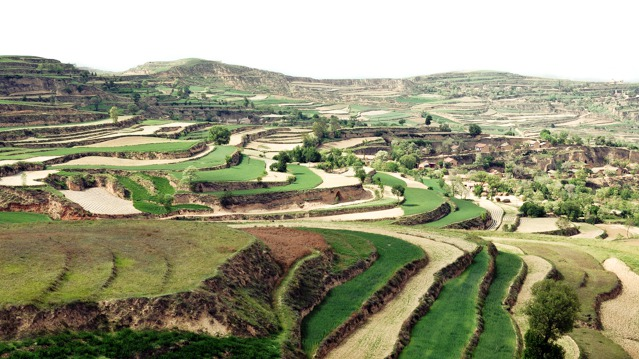 Constructed terrace for agriculture on the Loess Plateau-639