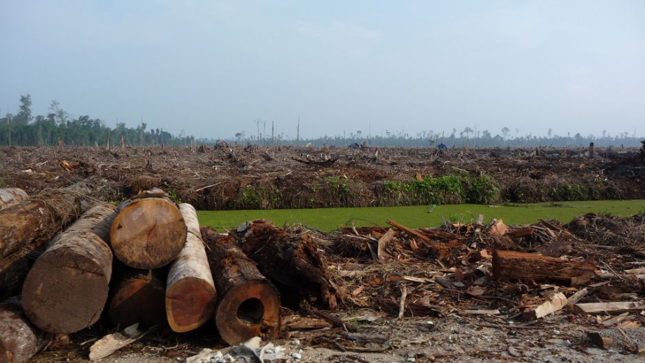 Indonesias Presidential Hopefuls Face Up to Deforestation