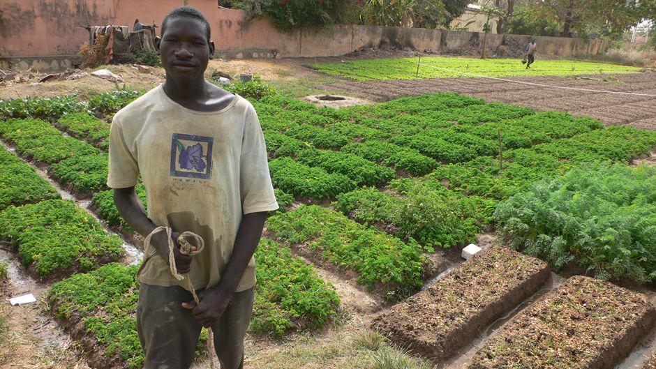 Bamako urban farmer