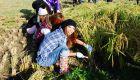 Fashionista farm gals of Tokyo