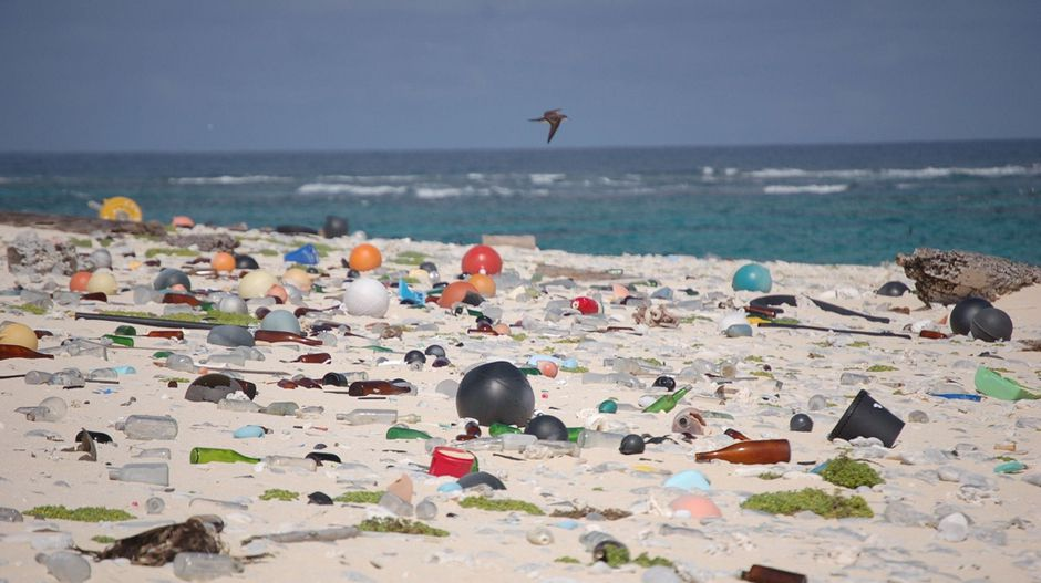 plastic along with the actual natural world articles
