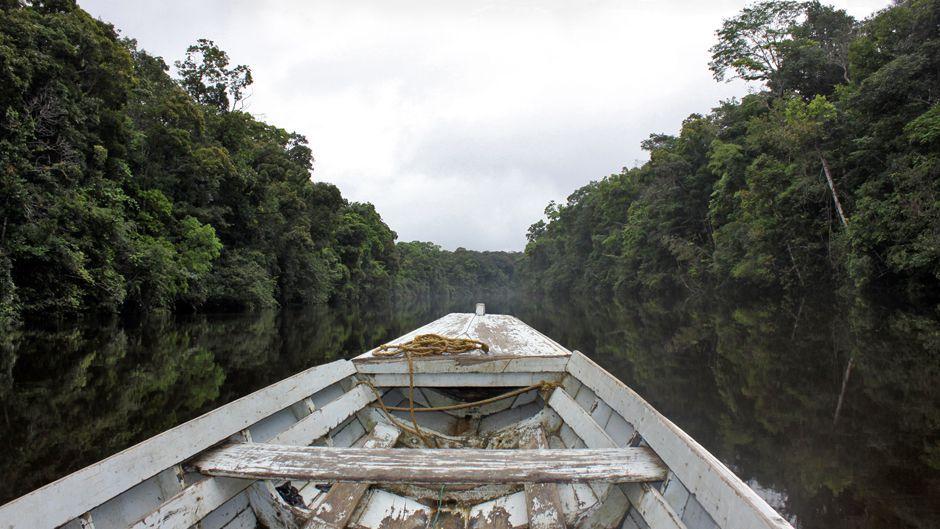 Indigenous People Measure Carbon That Satellites Miss