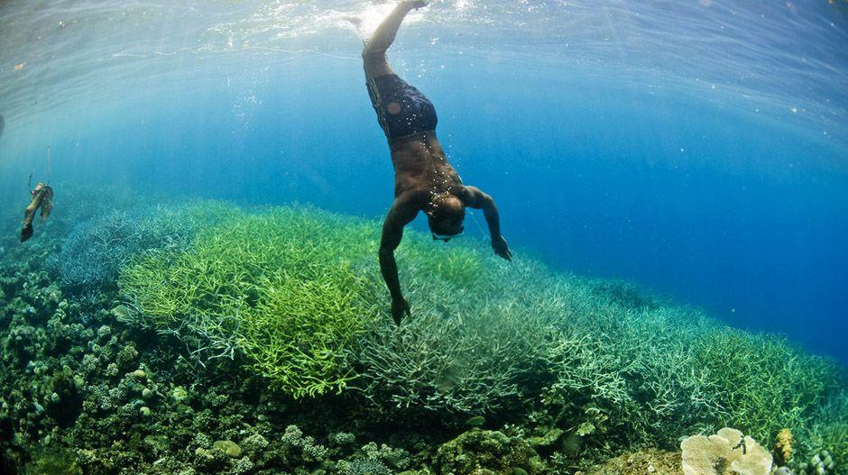 Coral Triangle - diver