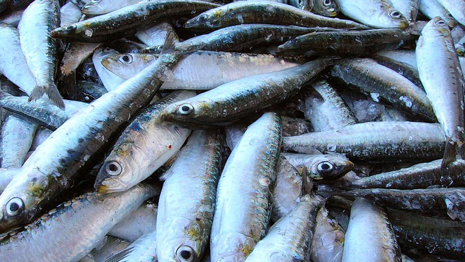 Scaling up sustainable seafood