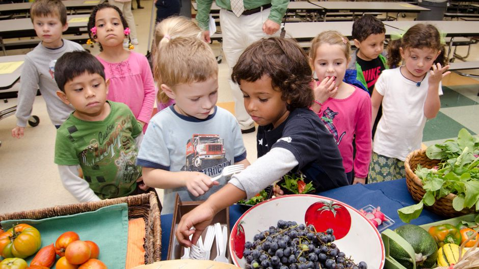 Home-grown Food in Schools for a Green Economy