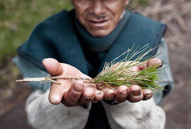Lima Isama Pedro with a pine branch. Mojandita, Ecuador. Photo by Nicolas Villaume. Nicolas Villaume.