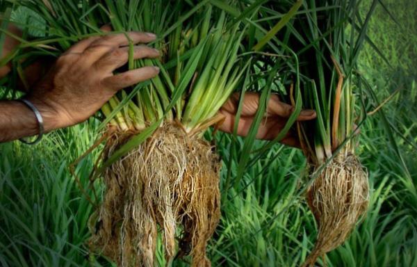 Best Soil For Raised Beds Uk