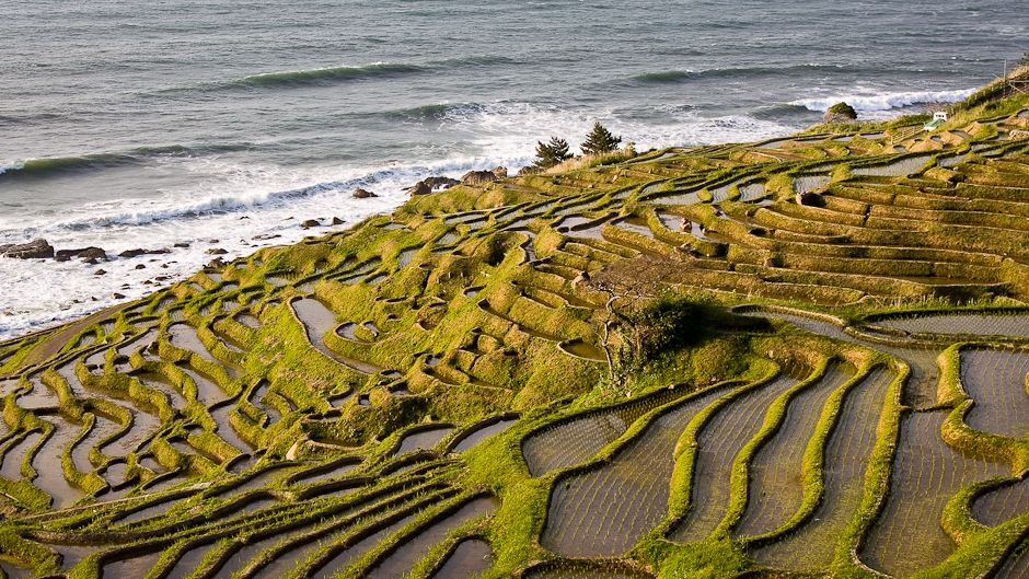 Urbanites help sustain japan s historic rice paddy for What are terraces