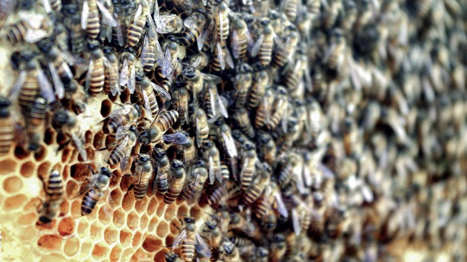 Vietnam beekeeping