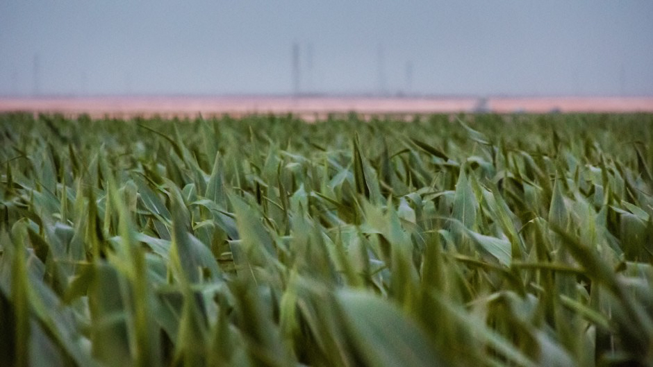 How and why Spain became the EU's top grower of GMOs