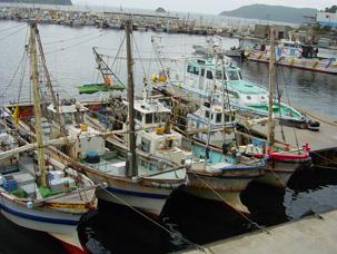 写真: 瀬戸内海の漁港に集まる漁船(坊勢島)