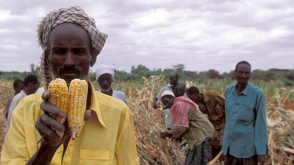 アフリカに緑の革命の時がやってきた