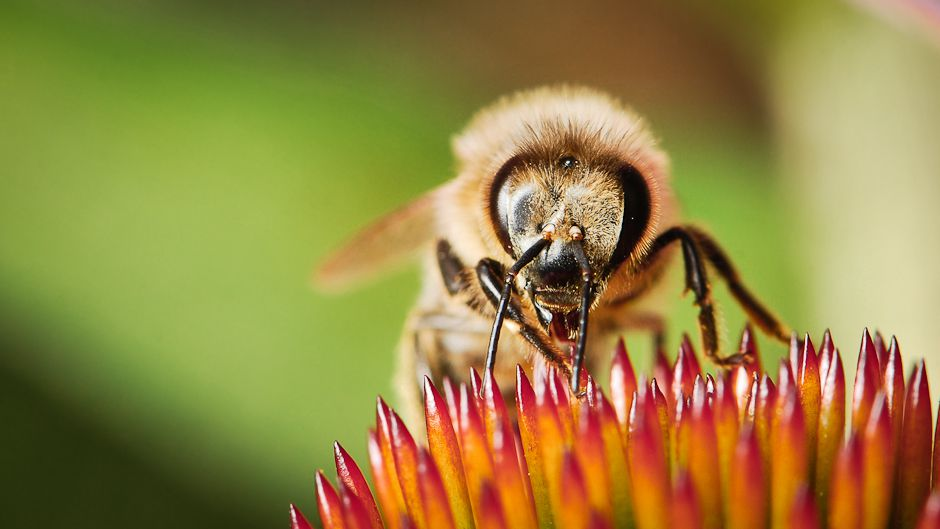 Protecting native bee populations in Mexico