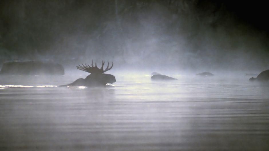 世界的に重要なオンタリオの生物多様性