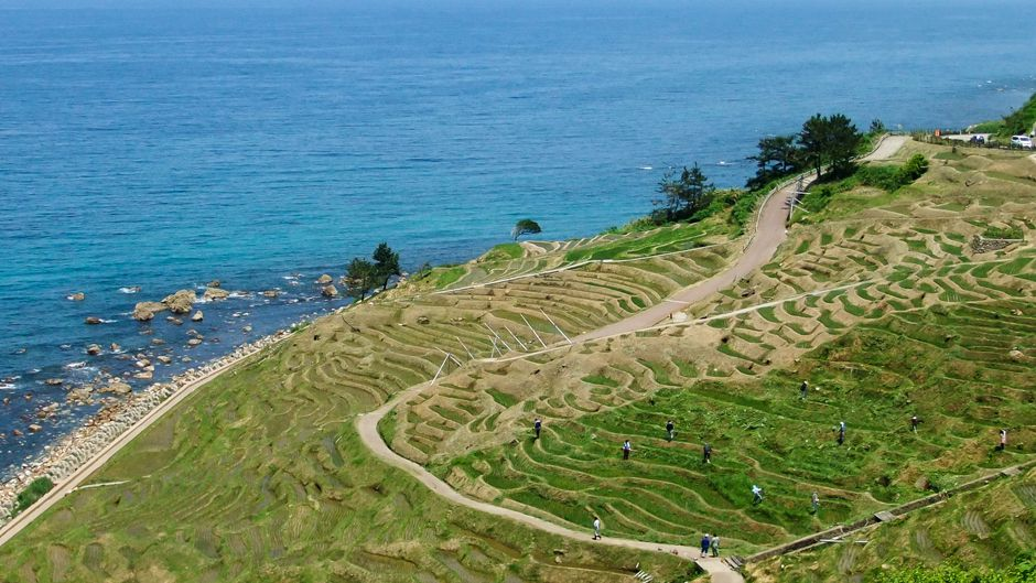 Japanese agricultural heritage systems recognized