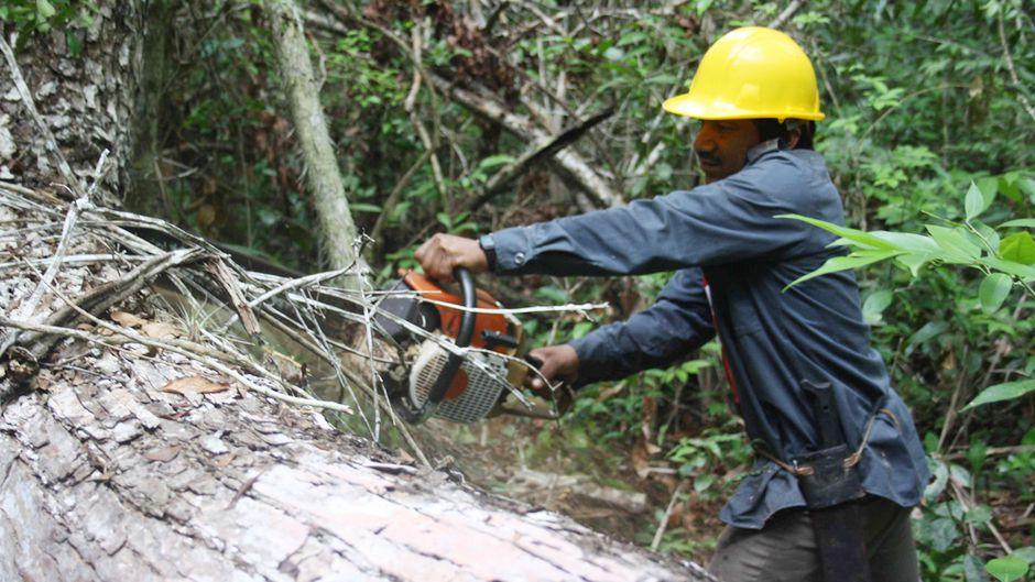 Community-management means lower deforestation
