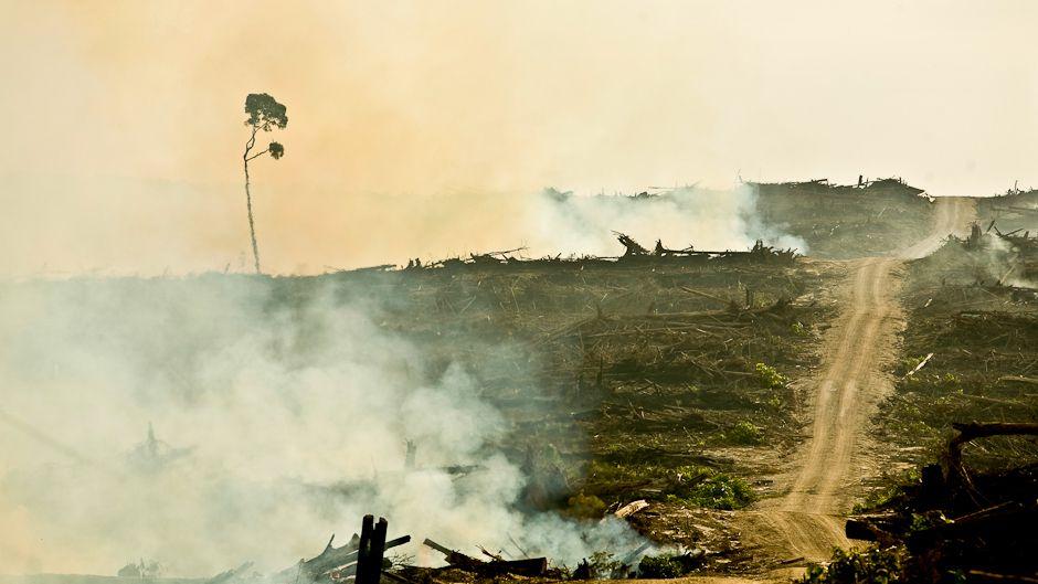 東南アジアにおける生物多様性喪失の原因