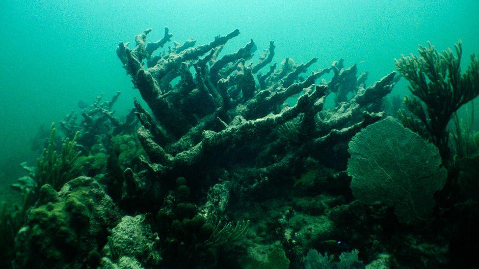サンゴ礁の死が意味するもの