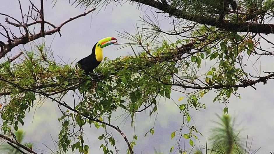 森林破壊のスピードを遅らせ、最終的にはその傾向を逆転させることにコスタリカが成功したのは、自国の生態系の価値を政策決定者たちが認めたからだ。アレナル・オブザバトリー・ロッジ 写真:RK & Tina