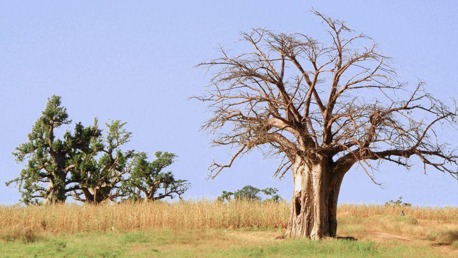 気候変動の最前線で闘うマリ共和国