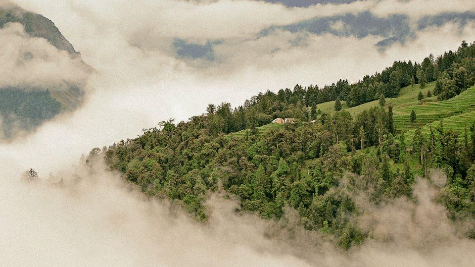 森林への理解を世界で高めよう