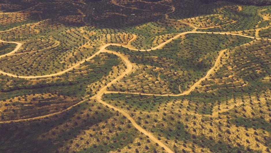 公正なパーム油生産を求めるバリ宣言