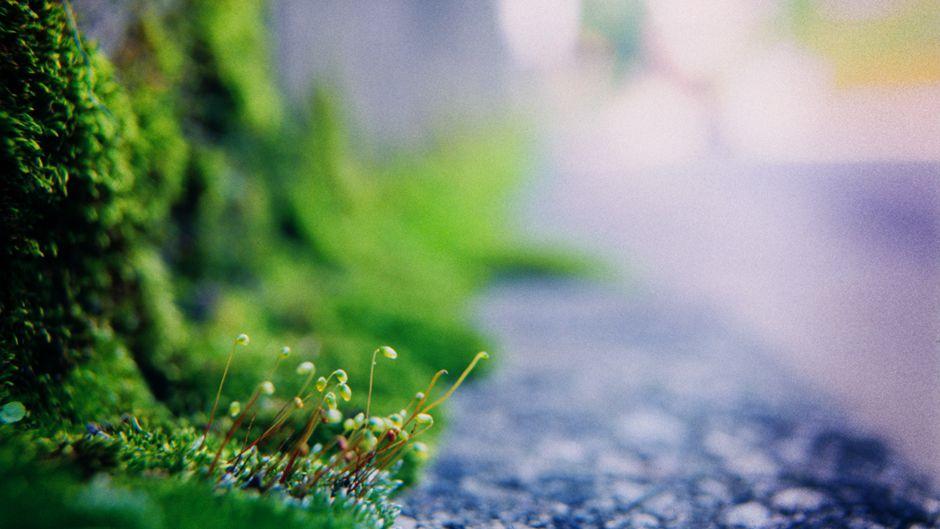 シンプルな生活から緑豊かな未来へ