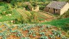 産業型農業の代わりを模索する中国