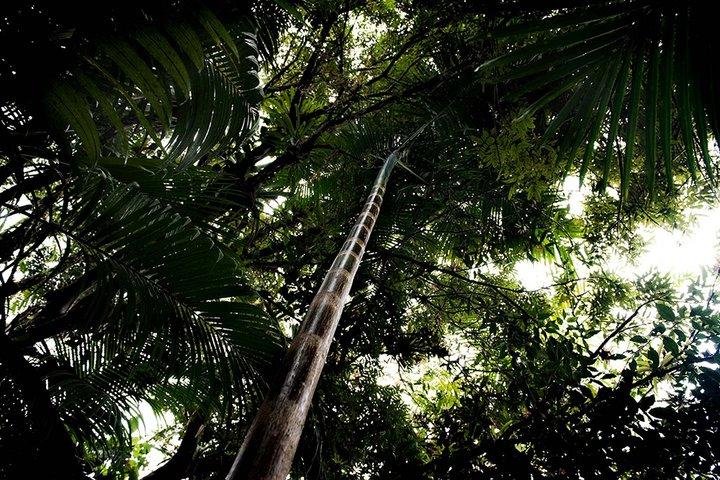写真:ニコラ・ヴィヨーム/CWE、出典「Guarani: The Price of Carbon(グアラニー:炭素の値段)」