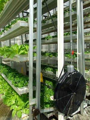 シンガポールの空中農園 Ourworld 日本語