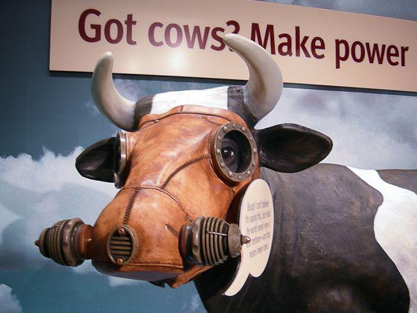 牛はメタンガスを大気中に排出する。メタンガスは二酸化炭素より25倍も環境に有害な汚染物質だ。写真:ジル・シーグリスト
