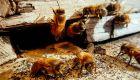 欧州がハチに有害な農薬を禁止