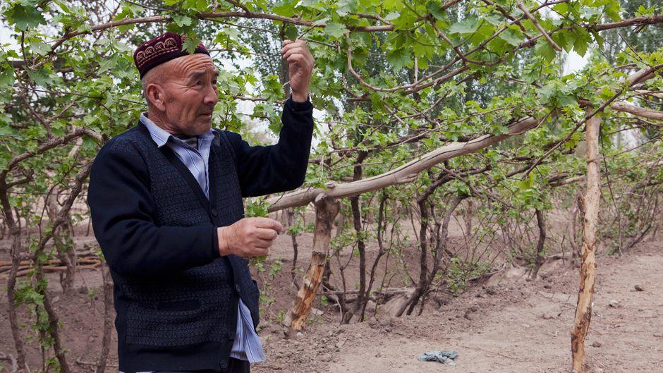 中国ワインブーム、パンダと農家は恩恵わずか