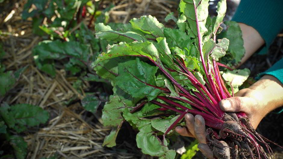 Growing-Food-Movements