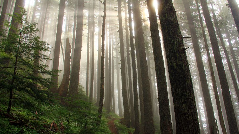 Forests for Our Future - Climate Connections