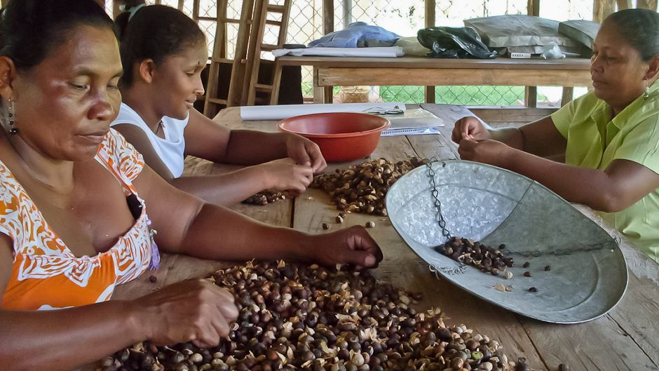 Maya nut could boost resilience to climate change