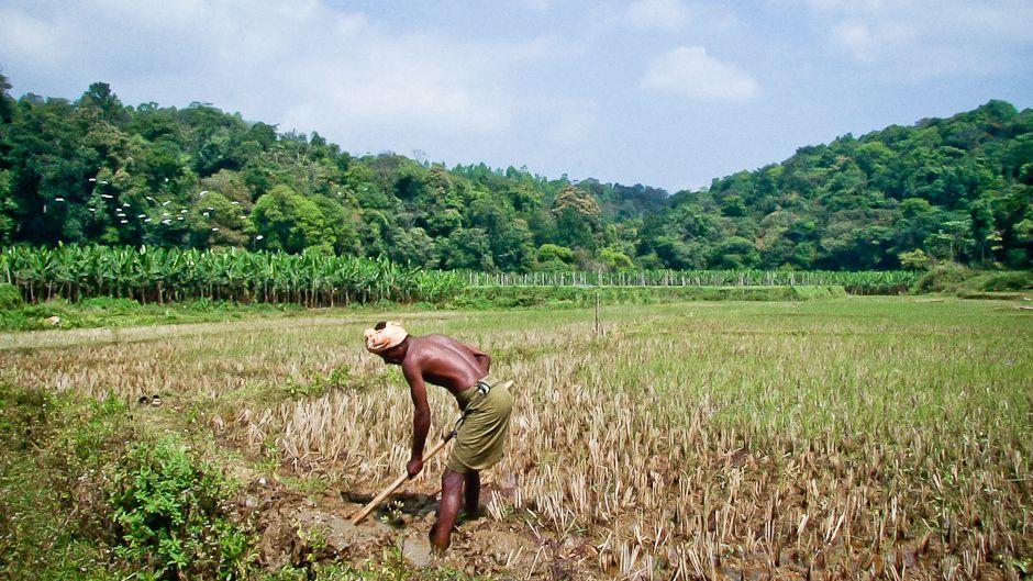 South Indian agricultural model mimics fragile ecosystem