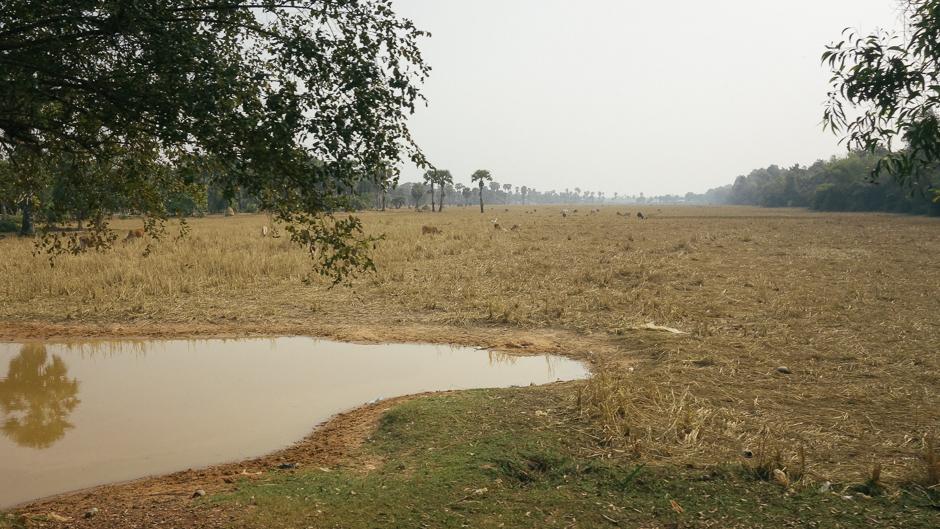 水がなく乾いたままの東バライ貯水池。Photo: Caecilia Manago/UNU-IAS