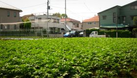 Japan's Urban Agriculture: Cultivating Sustainability and Well-being