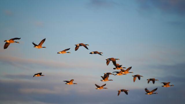 Animal spirits: Shaping patterns of economic growth - United
