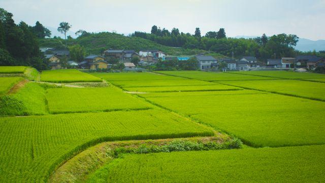 Biodiversity in Kanazawa: Spring's lesson