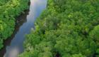 Borneo's Mystery Trees Guzzle Carbon